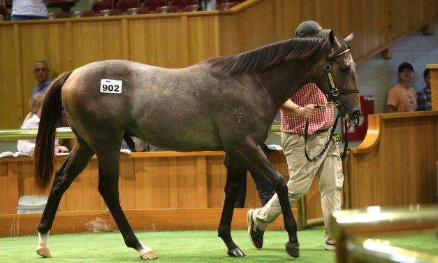 Young agent secures Jimmy Choux colt