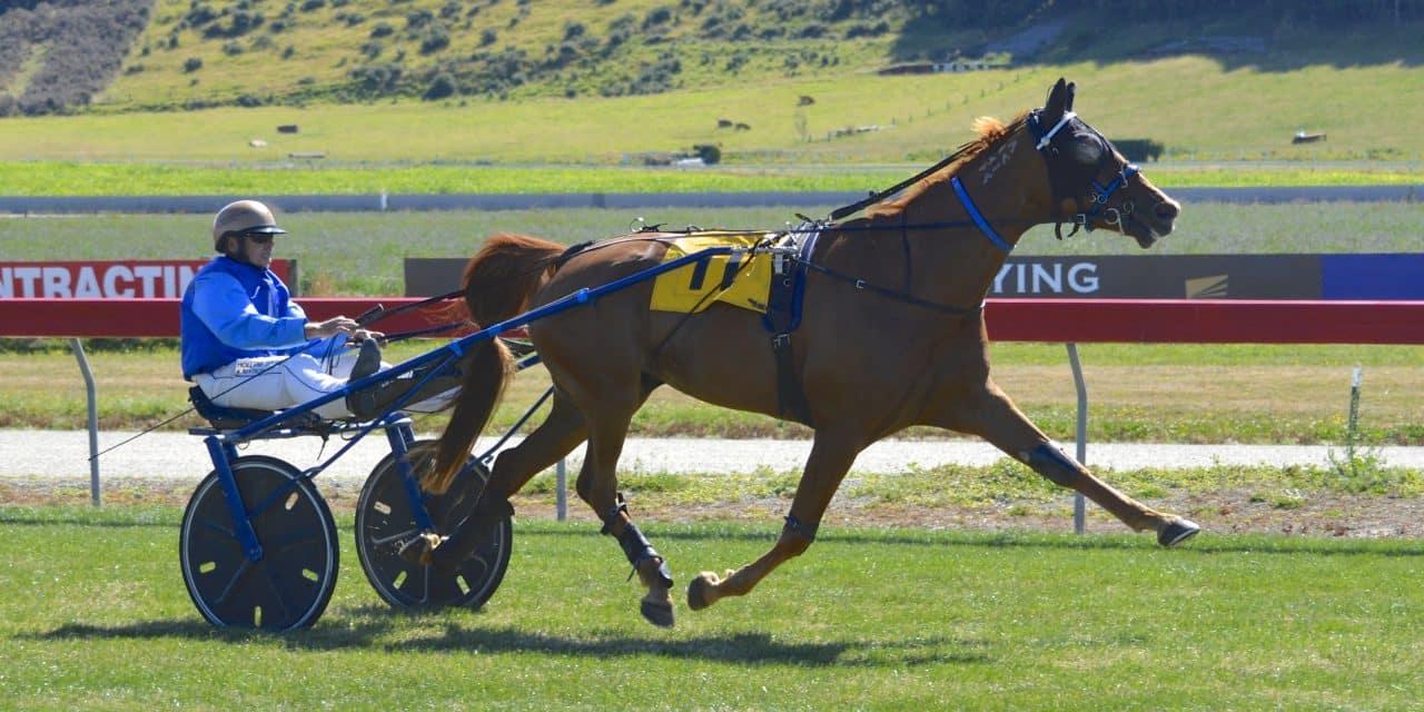 Headache mare plays it cool at Oamaru