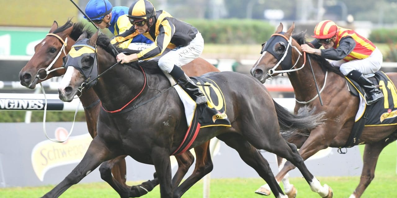 <i class='fa fa-info-circle red' aria-hidden='true'></i> Trapeze Artist primed for redemption in Canterbury Stakes