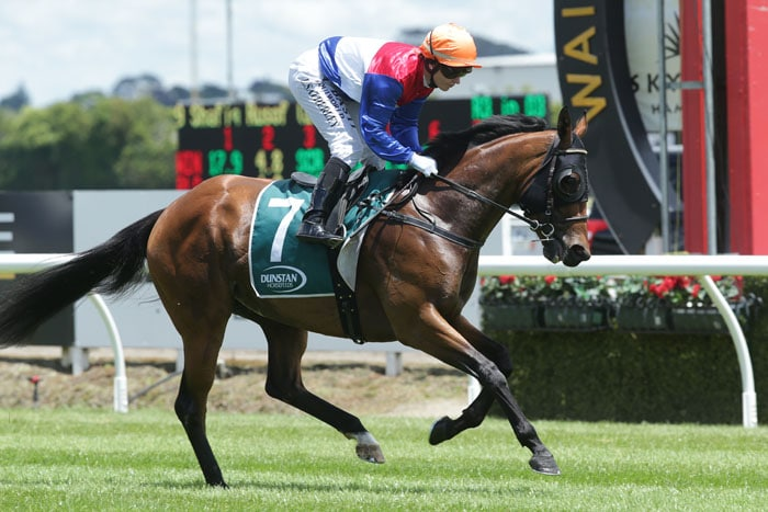 Tauranga favourite scratched after bizarre overnight incident