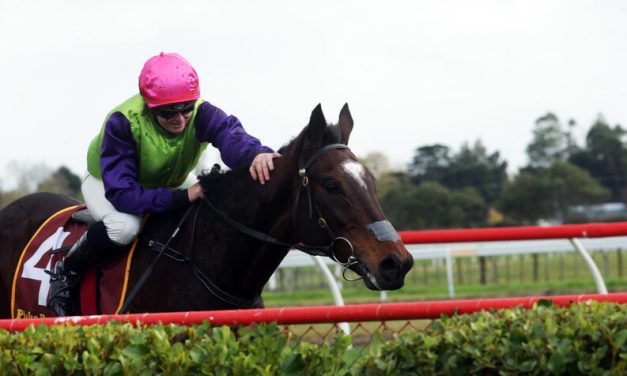 GOBSTOPPER MAKES SUCCESSFUL JUMPING DEBUT