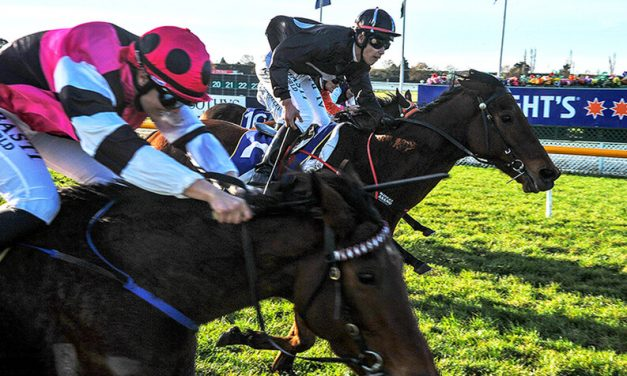 LIL MISS SWISS CLAIMS AMBERLEY CUP