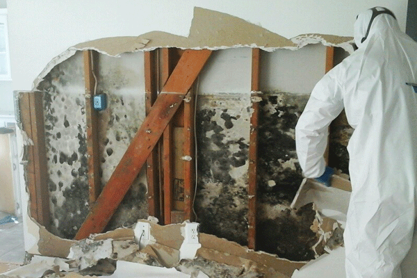 mold removal damage repair