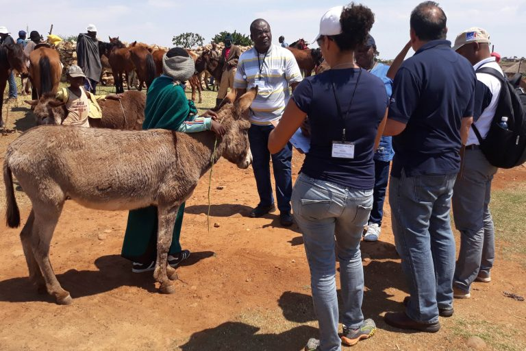 International Coalition for Working Equids workshop provides practical training