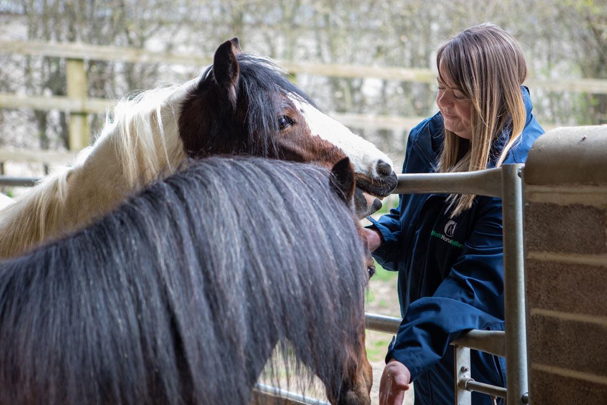 Grey pony in Stableyard at Glenda Spooner Farm with deep straw bed and haynet