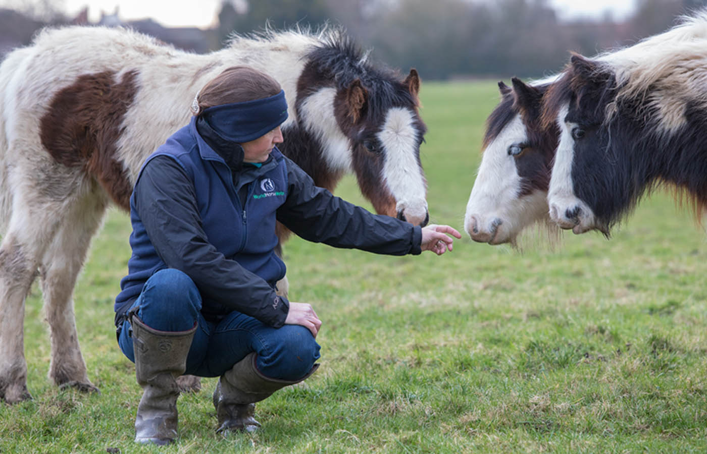 Working to improve horses' lives