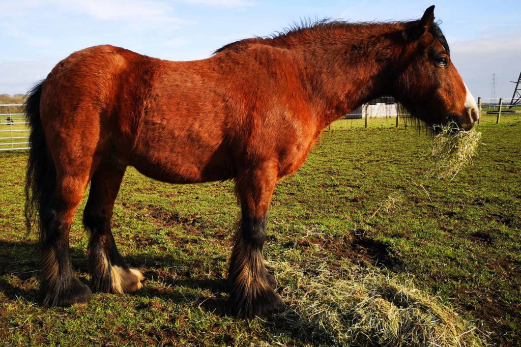 Little Ginger at World Horse Welfare Penny Farm