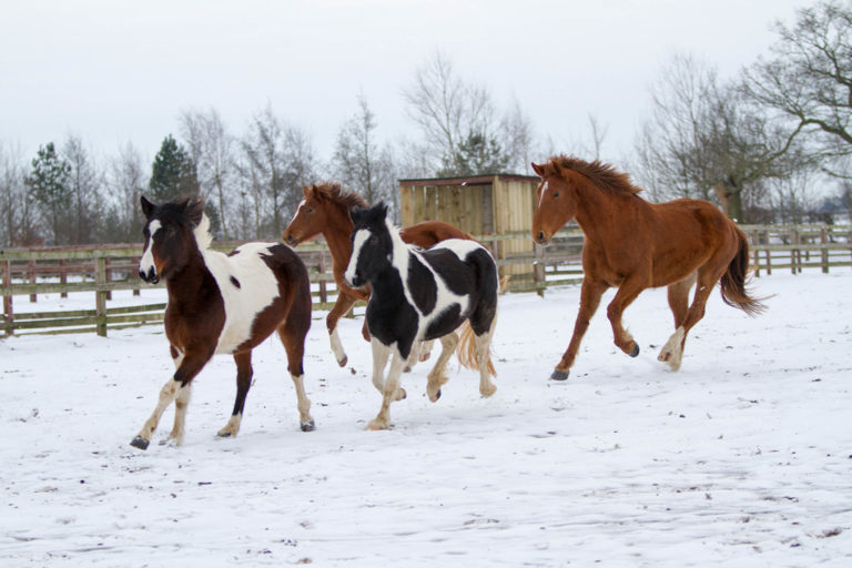 Winter horse care tips
