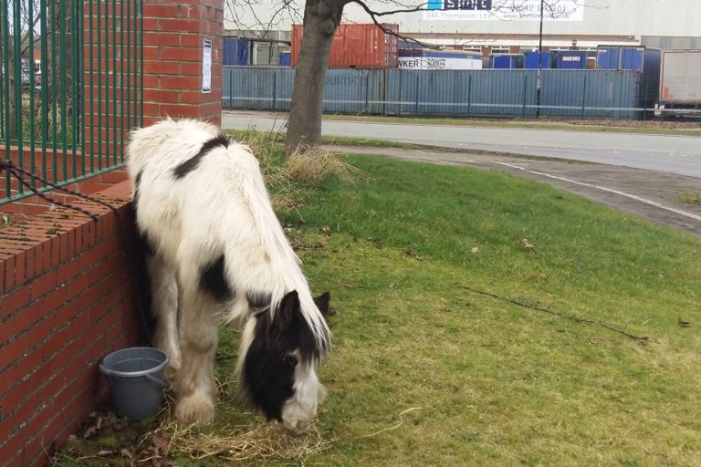 'Sparkling' pair of young ponies rescued from abandonment