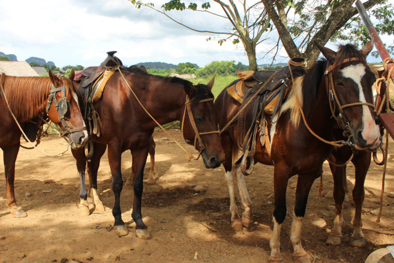 Working horses in holiday destinations