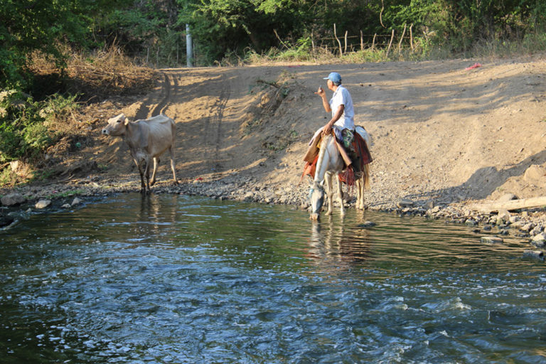Where we are helping horses
