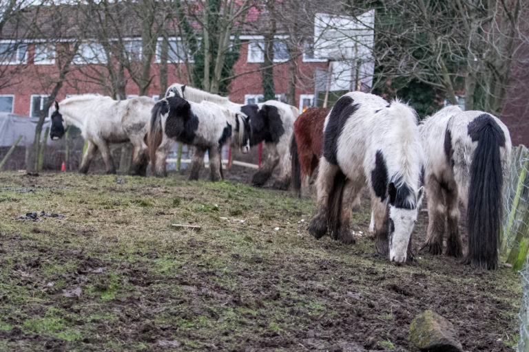 Horse crisis in the UK