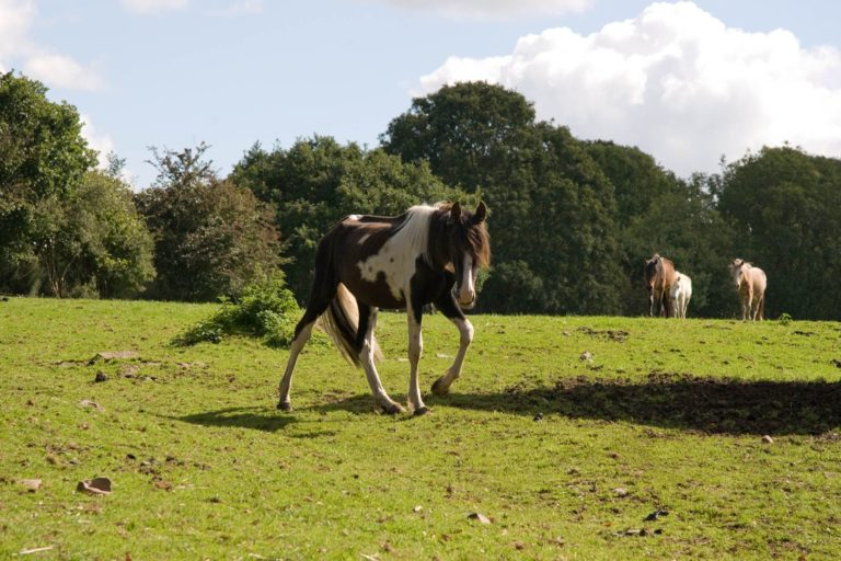 Horse welfare in the UK