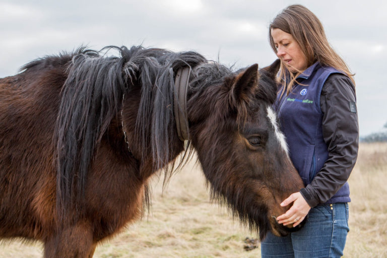 Report into the effectiveness of the Animal Welfare Act: Our views