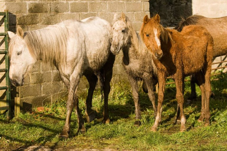 World Horse Welfare uncovers gruesome scene of suffering
