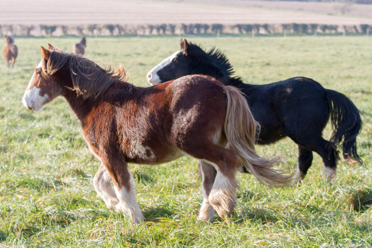 Responsible rehoming of horses