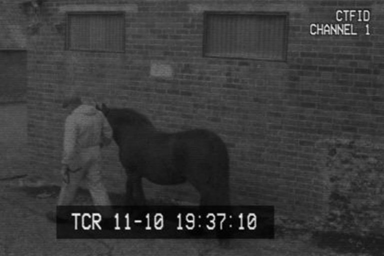 World Horse Welfare welcomes decision to make CCTV mandatory in English slaughterhouses