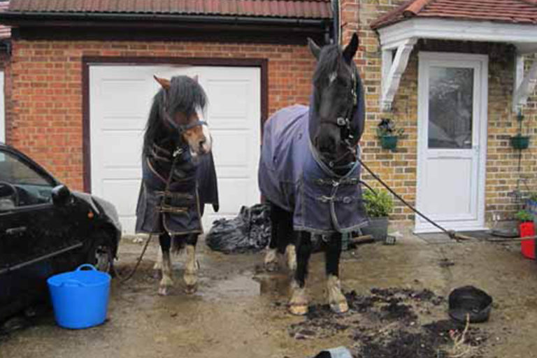Field Officer finds horses tied to the wheels of cars on front drive of house