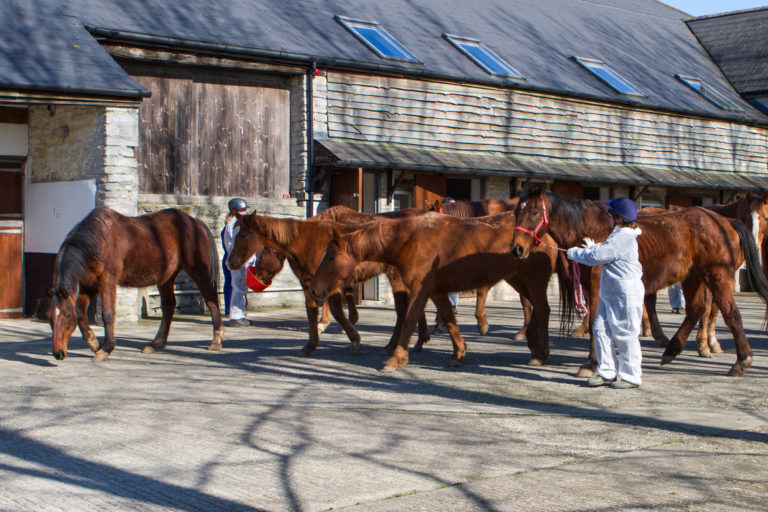 How do you prevent disease in horses?