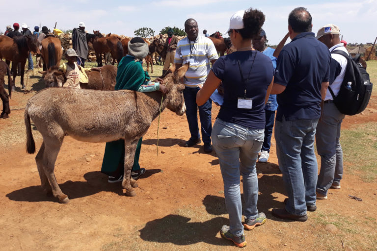 Coalition For Working Equids welcomes statement on need to protect equine welfare in donkey trade