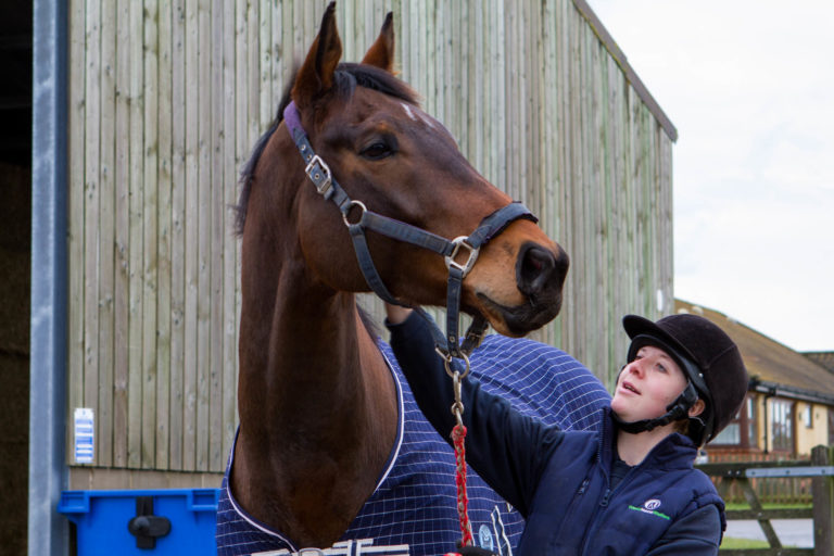 Charities warn owners to exercise caution when finding horses new homes