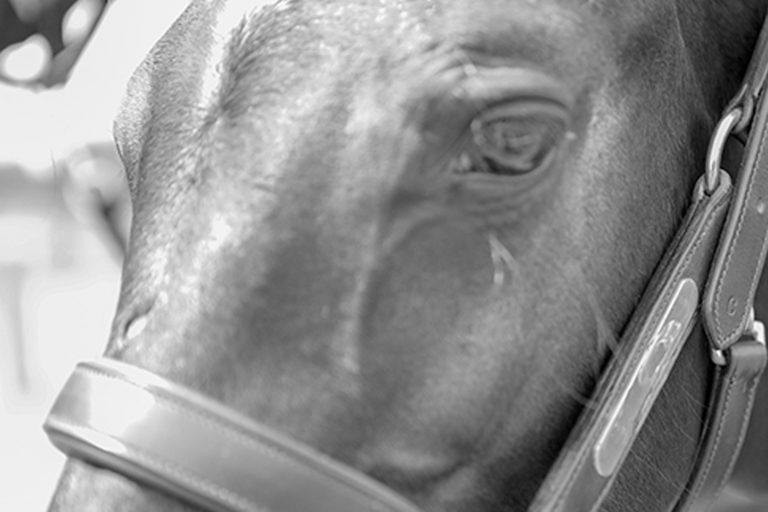 World Horse Welfare statement on 2019 Cheltenham Festival