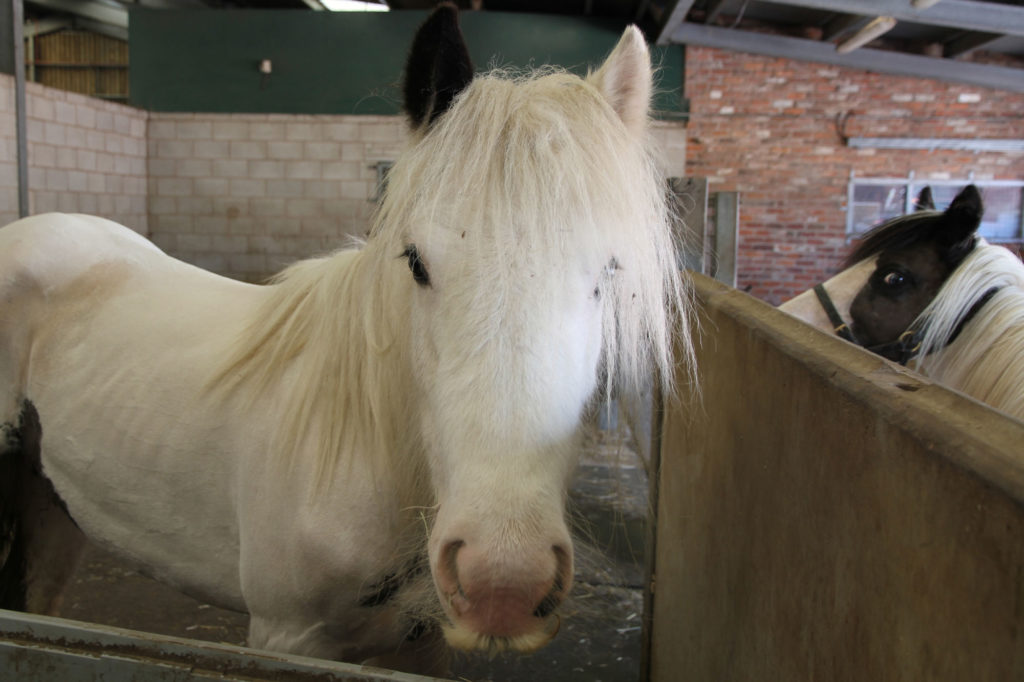 Diamond and Quartz in World Horse Welfare care