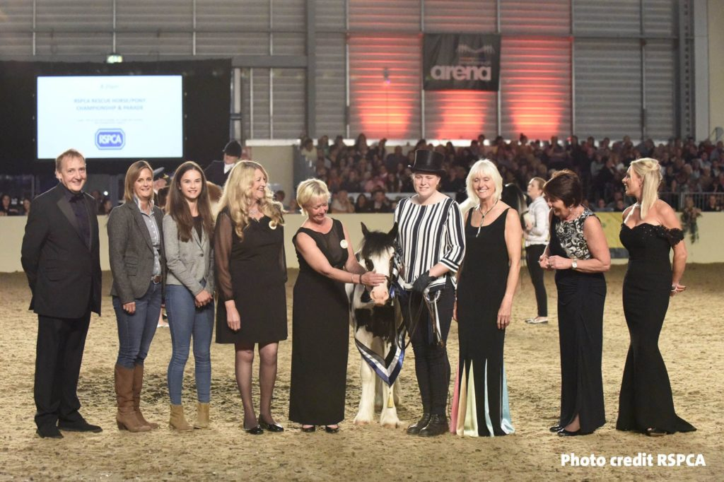 Buggy and his groom in the presentation lineup at Equifest show