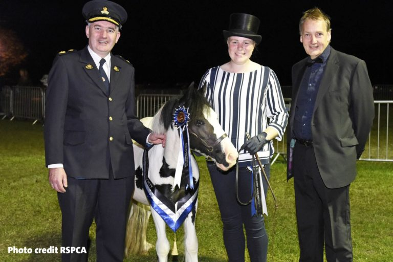 Pony found eaten alive by maggots is crowned show ring champion