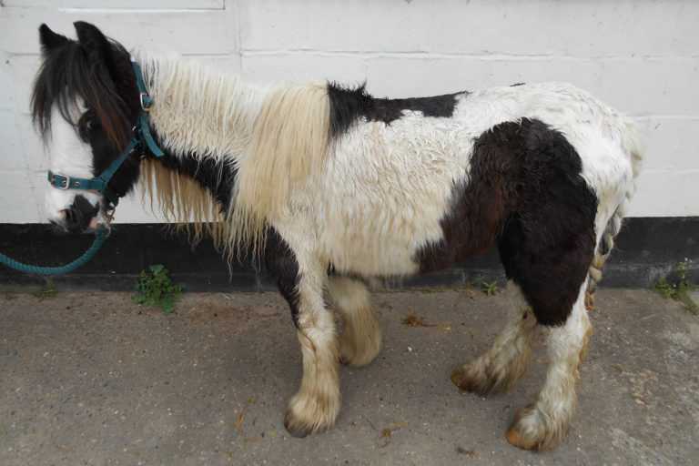 Appeal for information after third horse found dumped in less than two weeks