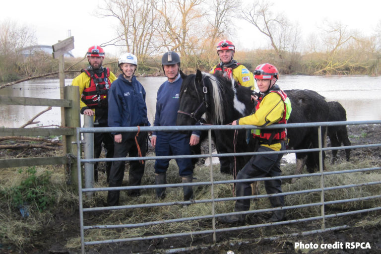 Nine horses including two foals and a Shetland pony are rescued from deep flood waters in Middlesex