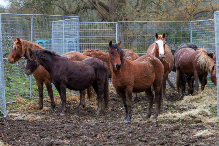 Charities work together to safeguard welfare of over 40 horses