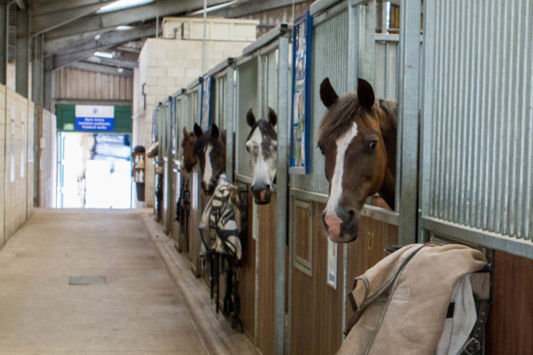 World Horse Welfare calls for a more open debate on stabling horses following latest research findings