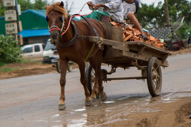 Equine experts at UN event highlight importance of working animals for a sustainable future for all