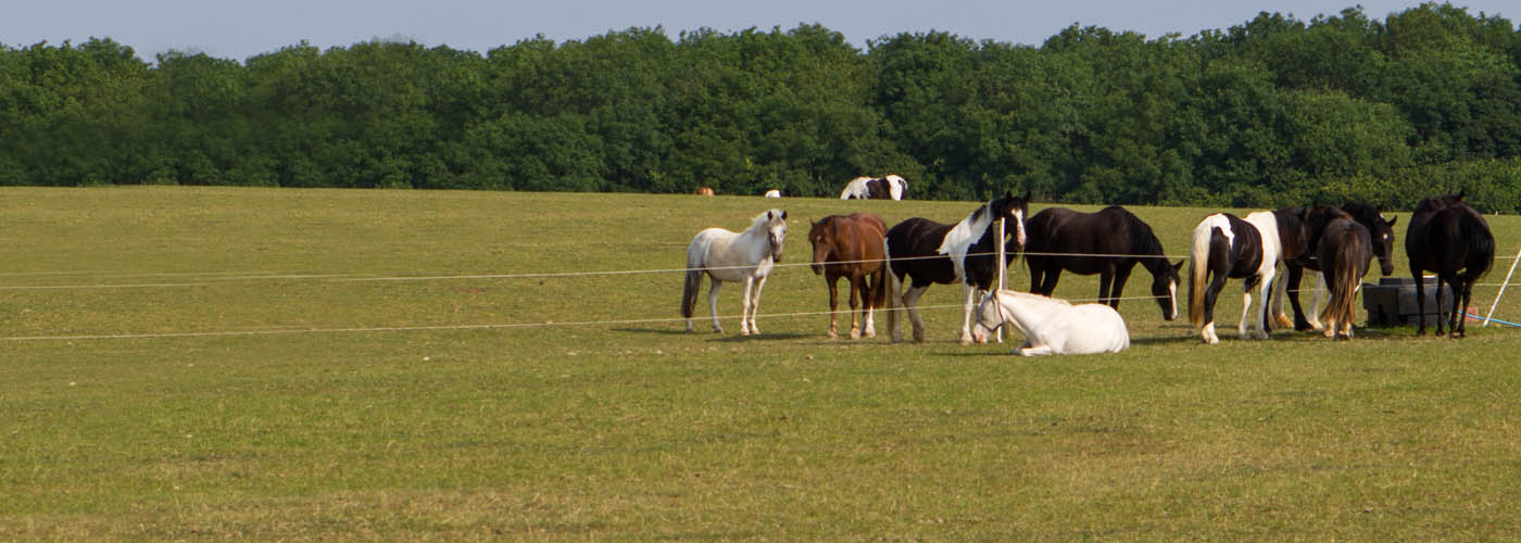 Animal welfare establishment