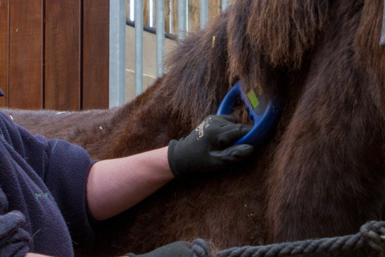 Equine ID and traceability