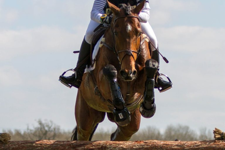 Horse welfare in sport