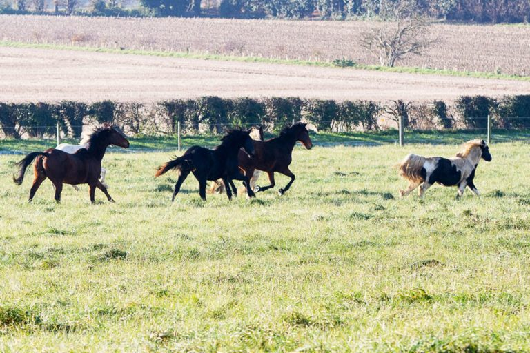 Helping horses