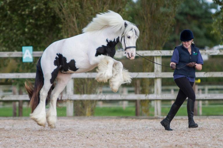Much-loved Adoption Horse Magpie put to sleep