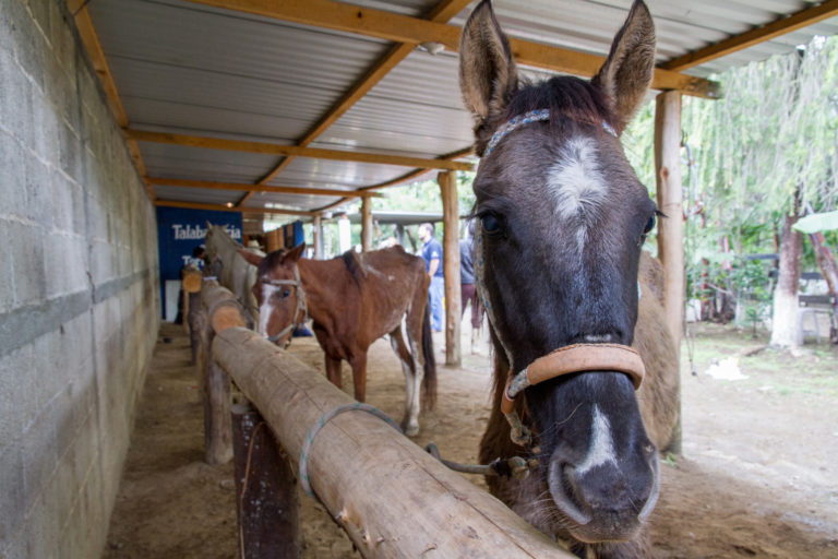 Project empowers working horse owning communities through training and upskilling