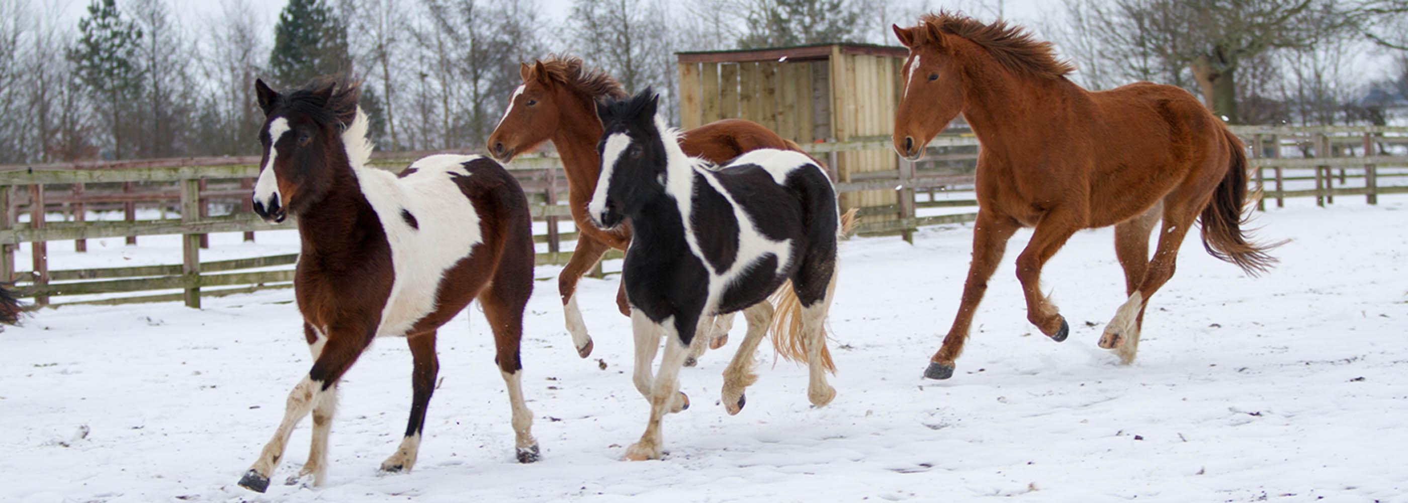 Winter Horse Care Tips World Horse Welfare