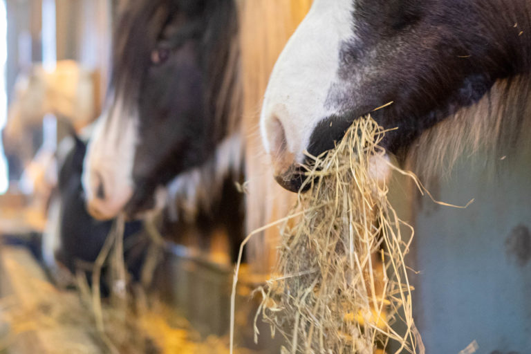 How should I feed a horse?