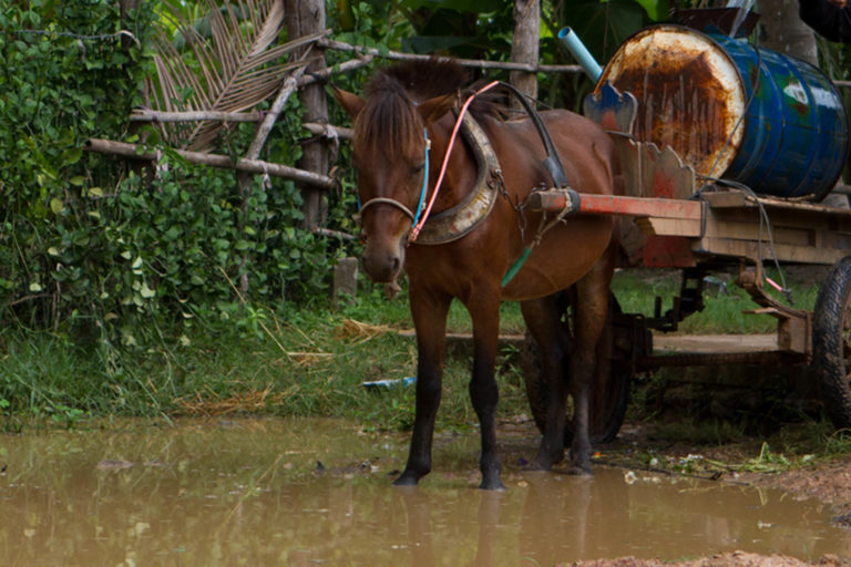 African Horse Sickness in Asia
