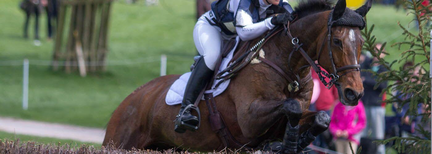 Horses in sport