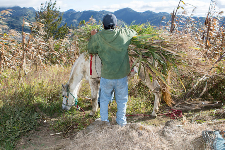 International equine welfare projects adapt to Covid-19 restrictions to protect horses through the pandemic
