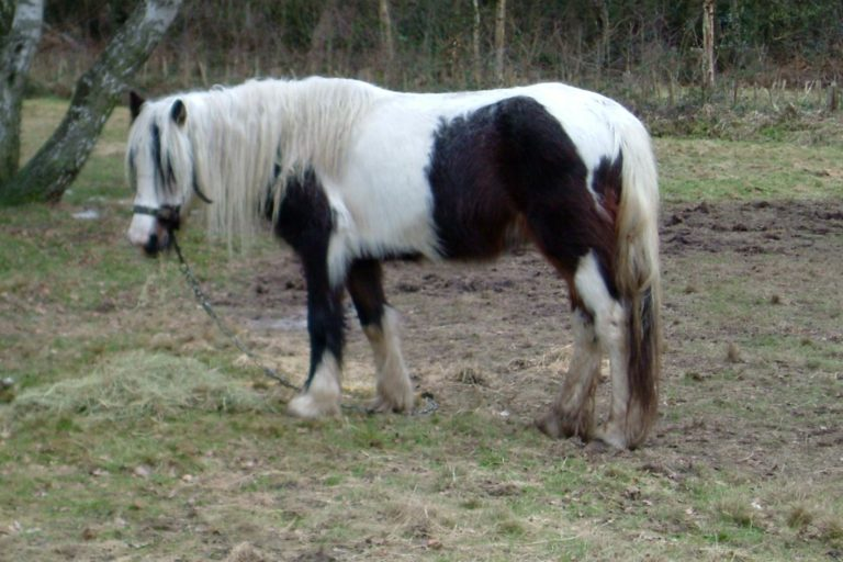 18 year old banned for two years after pony is found with horrific eye injury