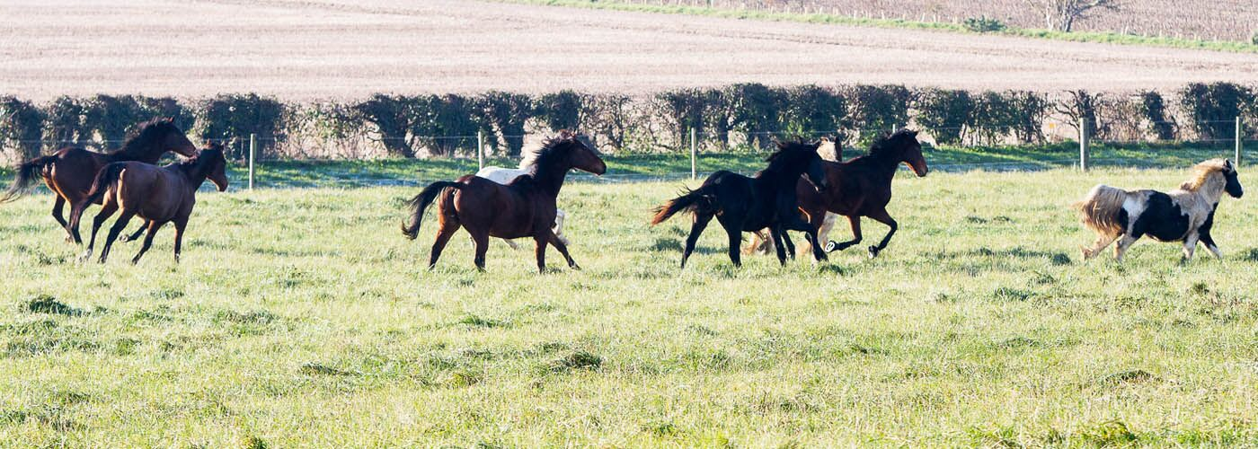 Small herd of horses galloping in field