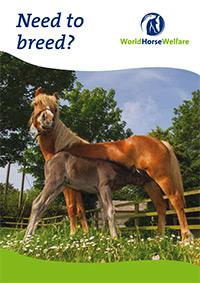 Need o breed leaflet