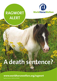 Ragwort alert leaflet
