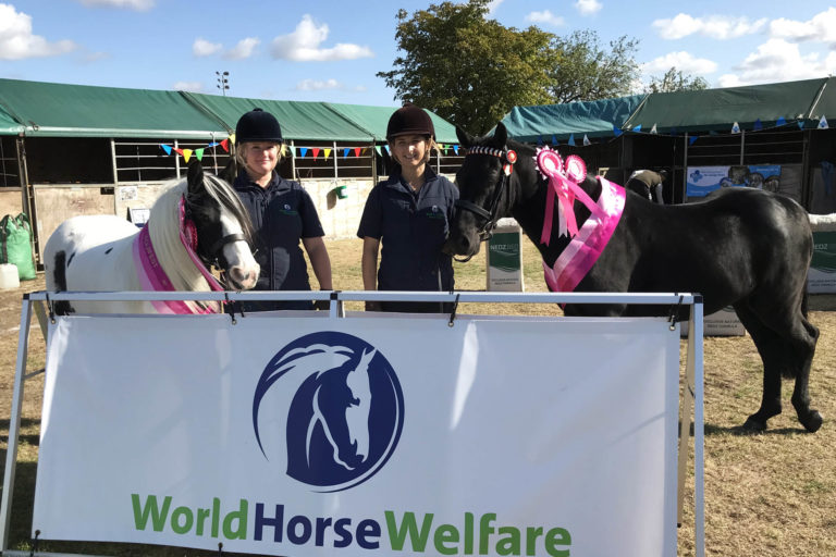 Ponies go from rescue cases to Equifest champions thanks to World Horse Welfare